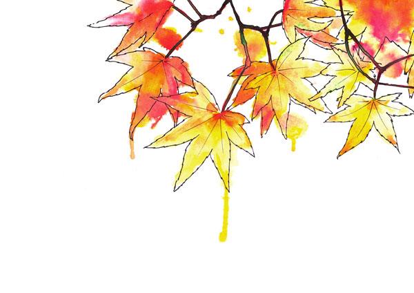 ilustración a tintas de hojas, galmir